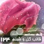 قالب وبلاگ گل و شبنم