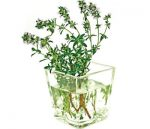برای درمان آکنه، از محلول آویشن استفاده کنید!