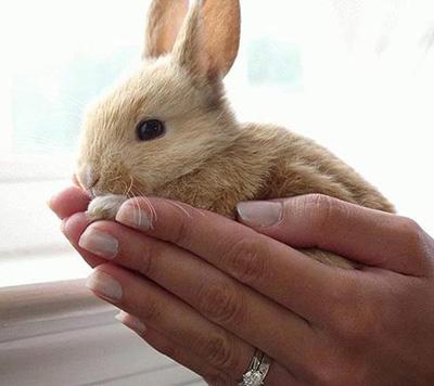 چگونه زبان خرگوش را متوجه شویم